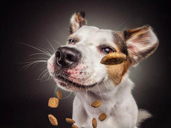 dogs-catching-treats-fotos-frei-schnauze-christian-vieler-3-57e8d08cdff80__880