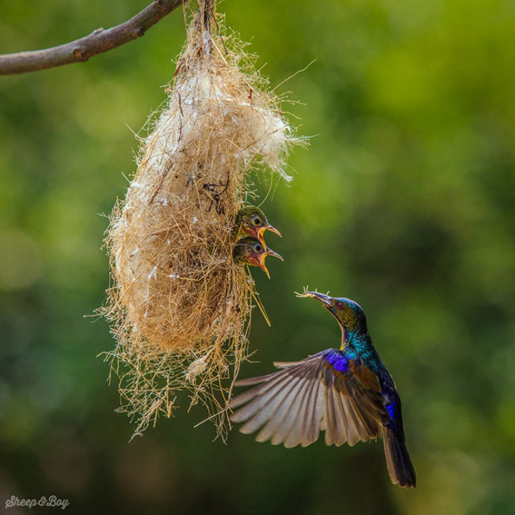 pictures-of-birds-with-their-little-onesn