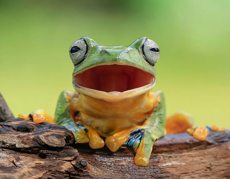 10-frog-laughing-out-loud