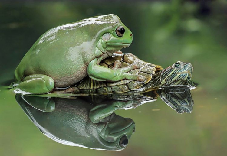 5-turtle-saves-froggy