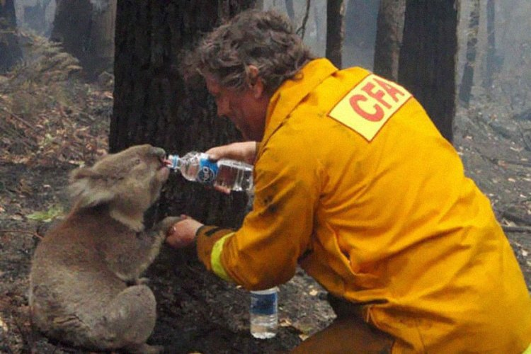 9-a-firefighter-gives-water-to-a-koala-during-the-devastating-black-saturday-bushfires-in-victoria-australia-in-2009