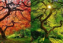 Before And After Photos Of Autumn's Beautiful Transformations VIRALLK (1)
