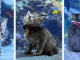 These Kittens And Pups Got To Explore A Giant Aquarium And It's Probably What We All Need In These Dark Times