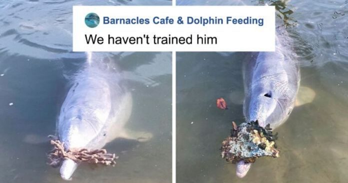 Dolphin Discovers Humans Like It When He Brings Them Gifts From The Bottom Of The Ocean, Develops A Habit Of Doing So