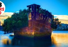 108-Year-Old Ship in Sydney Became A Floating Forest