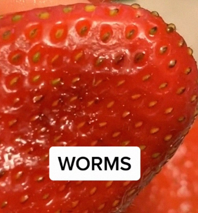 If You Put Strawberries Into Salt Water, Tiny Bugs Come Out Of Them