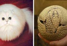 Unusually Round Animals