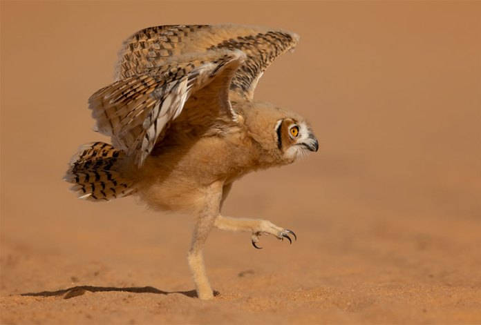 The Finalists Of The 2020 Comedy Wildlife Photography Awards Have Been Announced