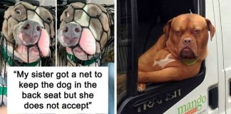 Doggos Acted So Ridiculously When Riding In Cars That Their Owners Just Had To Take A Pic