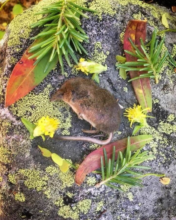 Beautiful Memorials For Dead Animals
