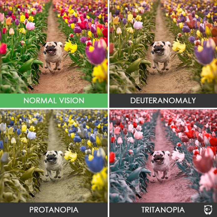 How People With Color Blindness See The World