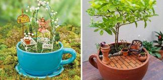 Tea cup garden. new gardening trend