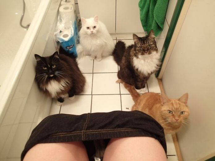 50 Cats Shamelessly Disrespecting People's Personal Space