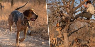 Trained Dogs Prevent Poachers From Killing 45 Rhinos In South Africa