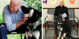 Joe Biden's Dog Major Will Be The First Shelter Dog To Live In The White House In History
