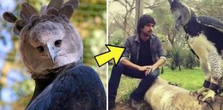 Meet The Harpy Eagle, A Bird So Big, and Some People Think It's A Person In A Costume
