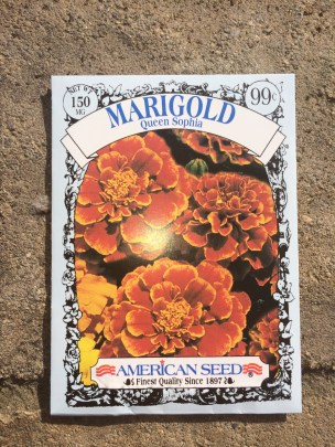Marigold seeds from Dollar Tree