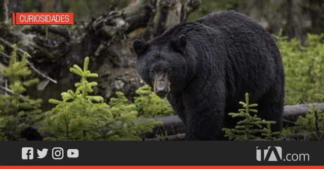 A young woman is attacked by a bear and manages to save herself by hitting it with a laptop