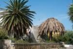Palma infestata .jpg