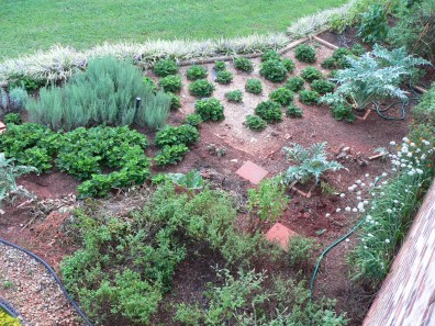 you can see my neat rows of strawberry plants, lavender bushes and beautiful artichokes from above