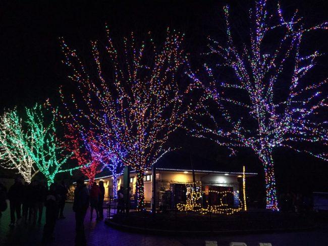 light displays - Christmas Lights In Dc