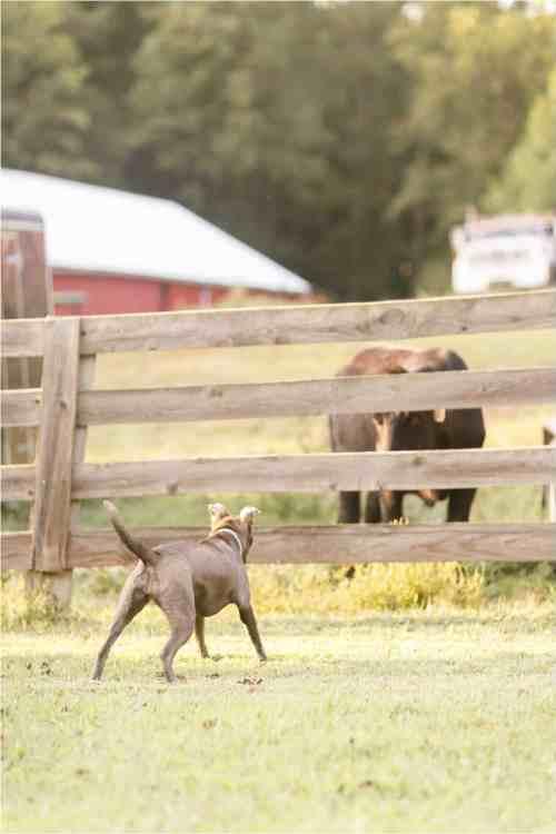 dogs on the farm photos