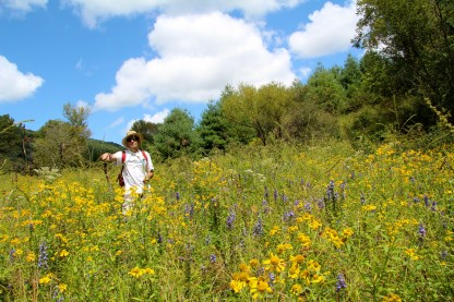 Murphy's farm in Craig County is planted in wildflowers to attract wildlife