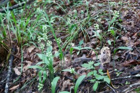 Small colony of blooming orchids
