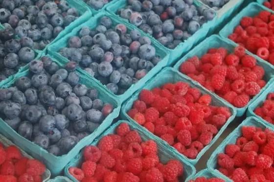 blueberries on www.virginiawillis.com
