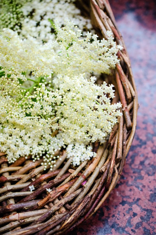 elderflower cordial on www.virginiawillis.com