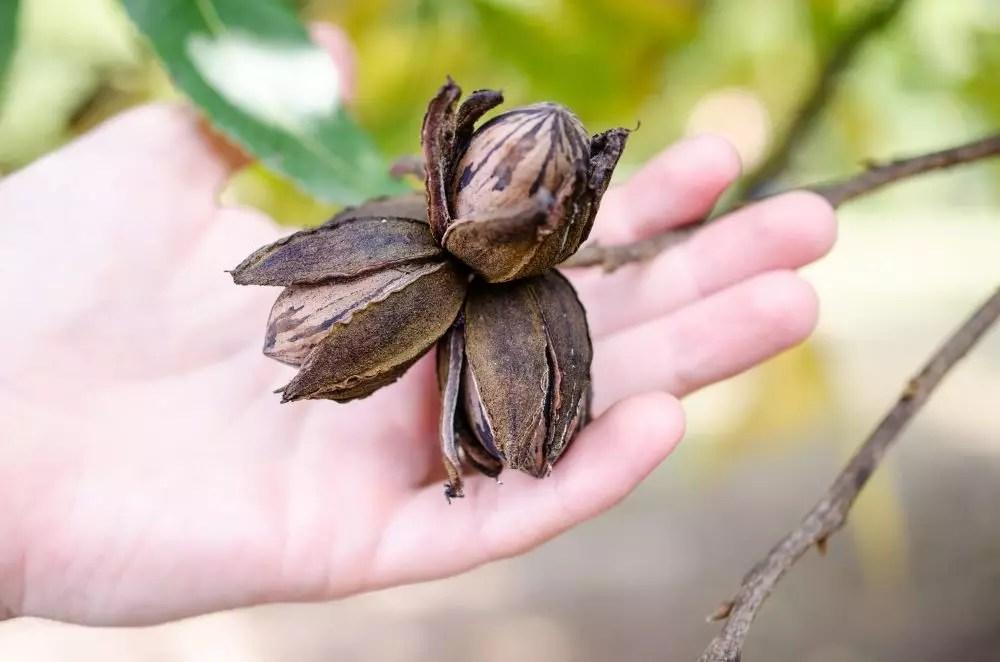 Small Batch Pecan Macaroon