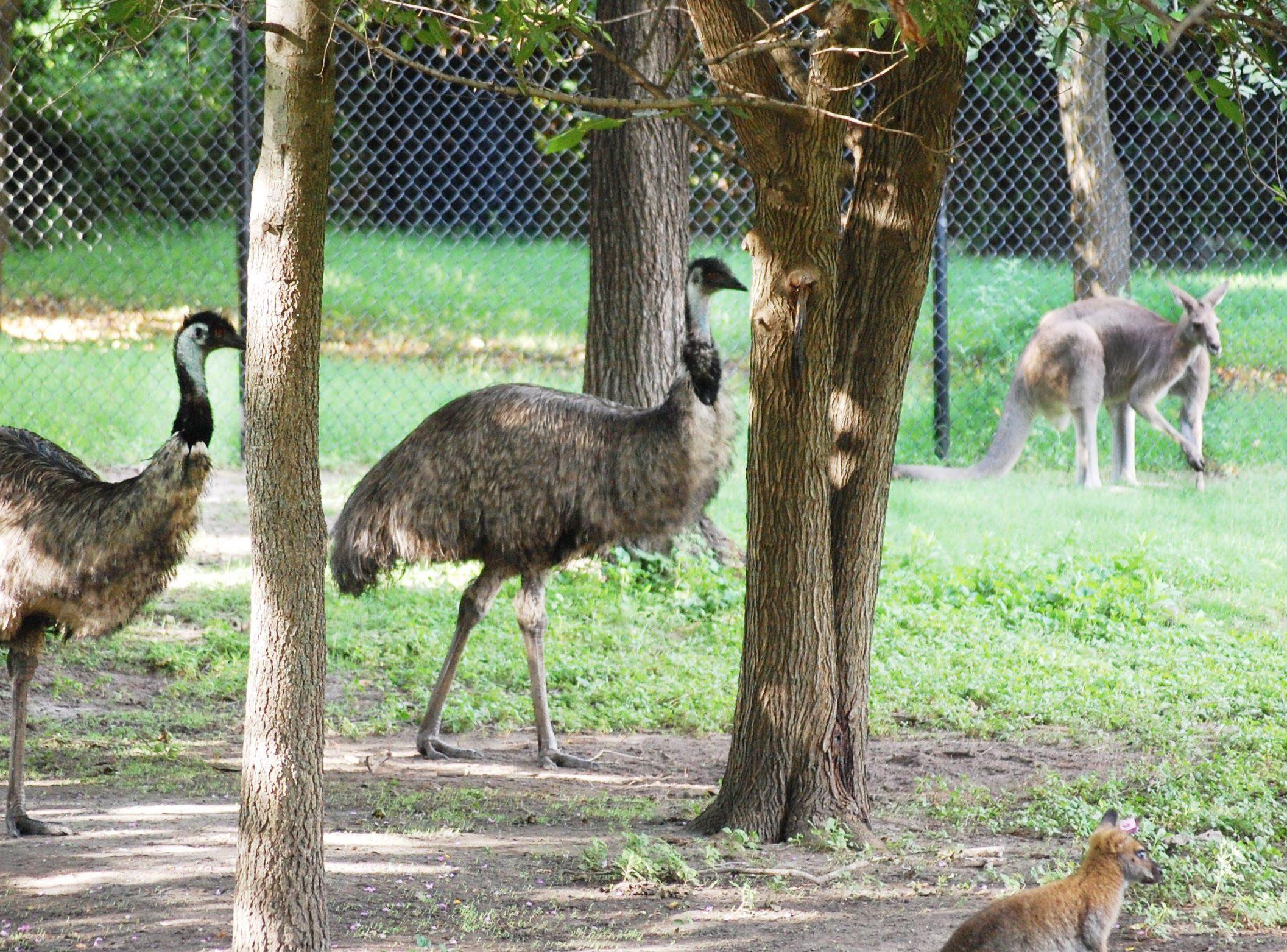 Australia animals