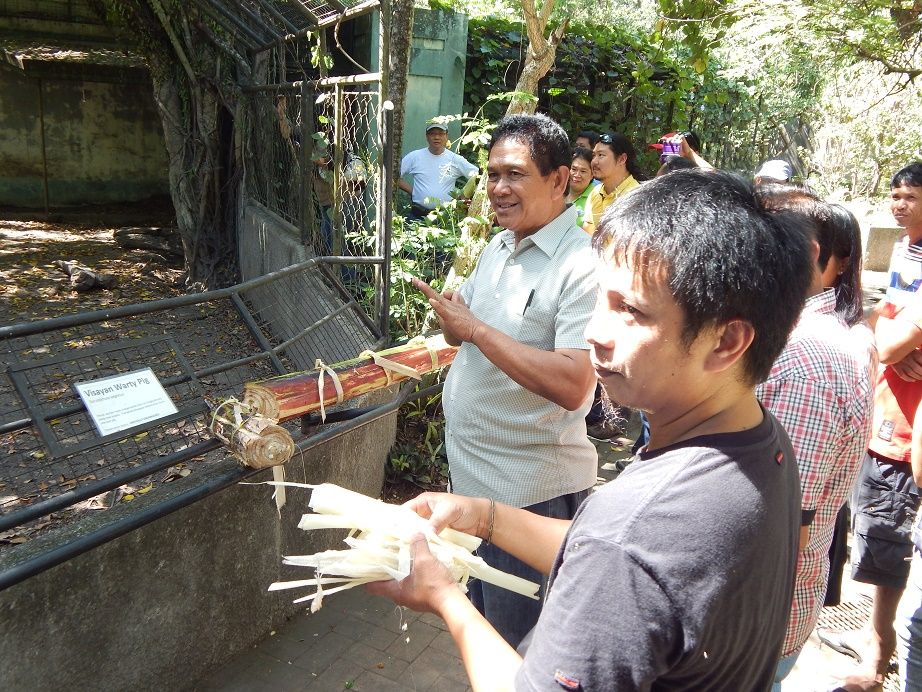 Discussing warty pig enrichment