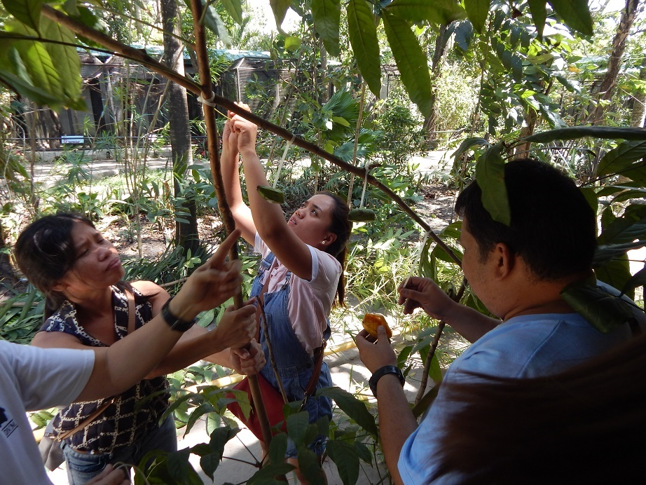 Making fruit bat enrichment