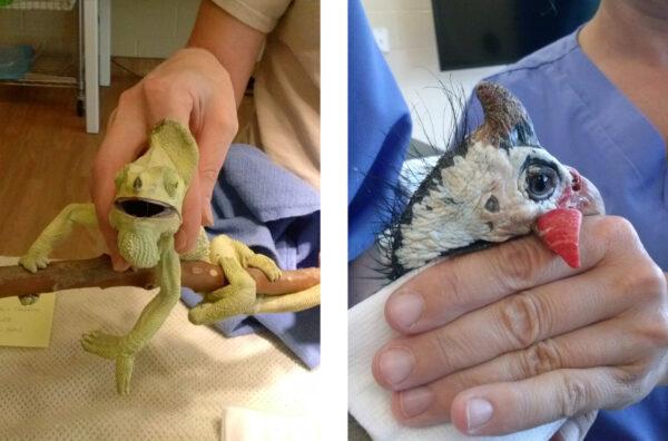 Virginia Zoo Intern Physical Exams