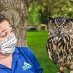 masked zoo educator and Eurasian eagle owl