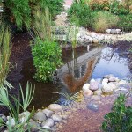 Photo of Rain Garden