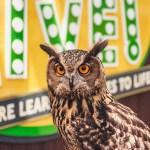 The Virginia Zoo's Eurasion Eagle Owl