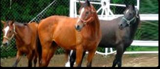 St. Thomas Horseback Riding