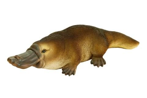 L'ornitorinco: un rebus evolutivo con un aspetto singolare
