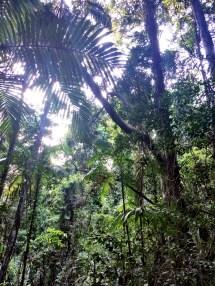 Noosa Rainforest track