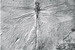 Dragonfly (archaic)