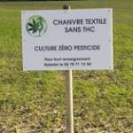 Chanvre sans THC
