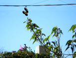 tree-reaching-for-sneakers-smaller