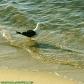DSC_0027-gull-on-sand