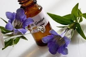 Fleurs de Bach Healing Herbs
