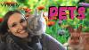 Pets Course Image