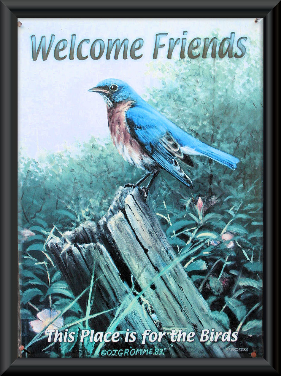 """""""This Place Is For The Birds!""""..... Bluebirds, that is, not House Sparrows!   We have this up to welcome our visitors!"""
