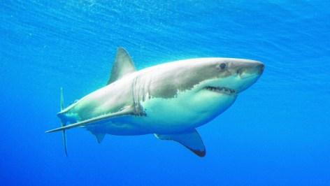 shark 360