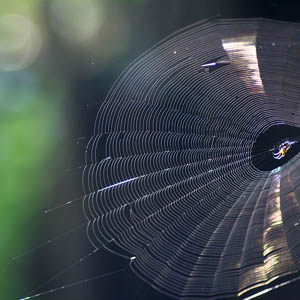 spider webs and your home